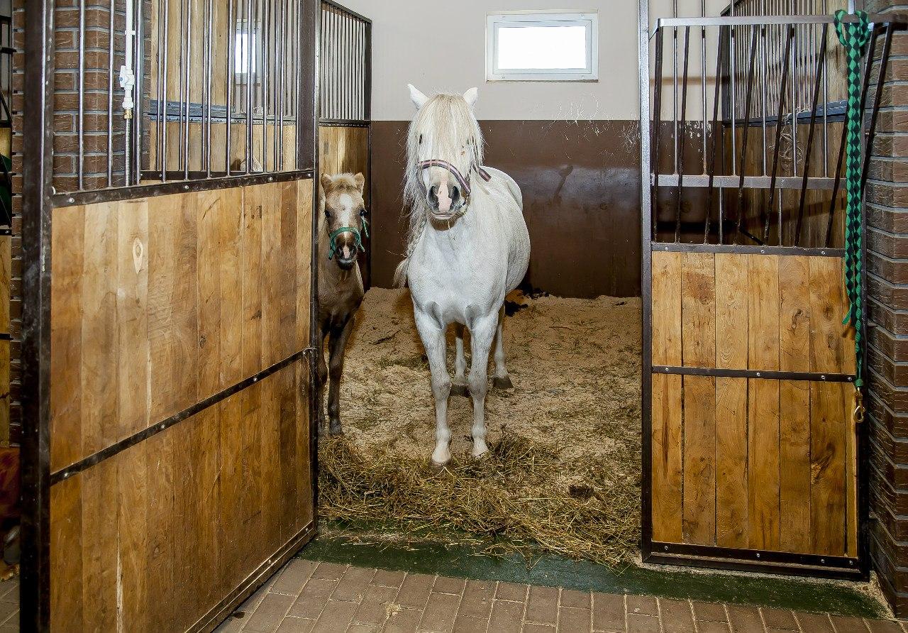Денник для лошади в домашних условиях